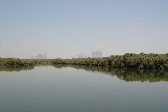 Mangrove Walk AUH