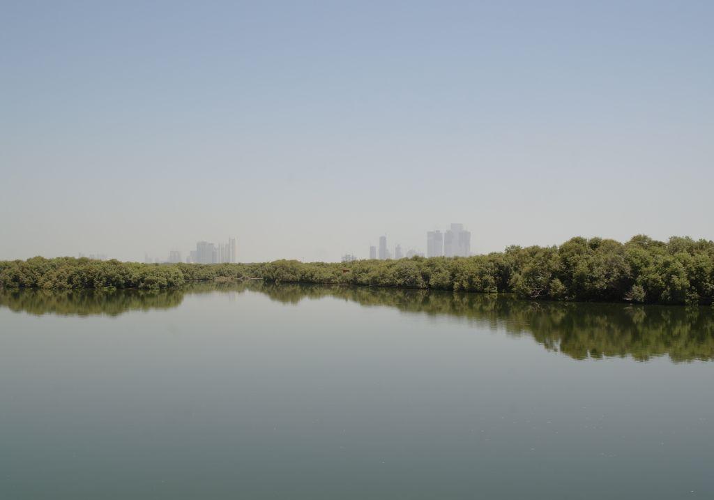 Mangroven Abu Dhabi