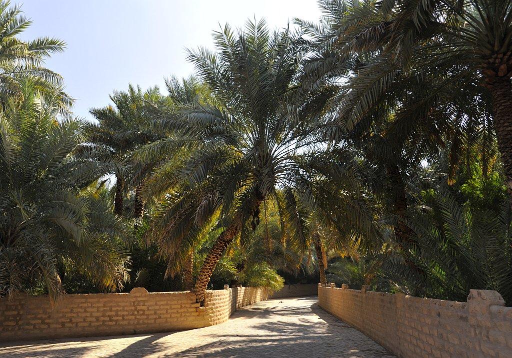 Al Ain Palmen Oase