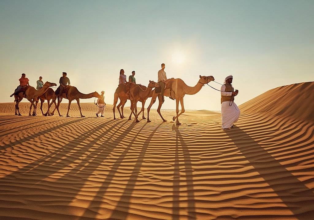 Kameltour Abu Dhabi