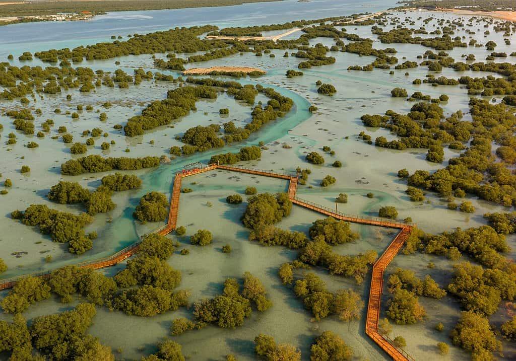 Naturpark Mangrovenwald Abu Dhabi