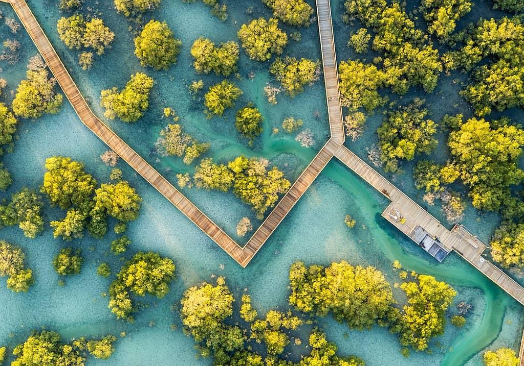 Mangrovenpark auf Jubai lsland Abu Dhabi