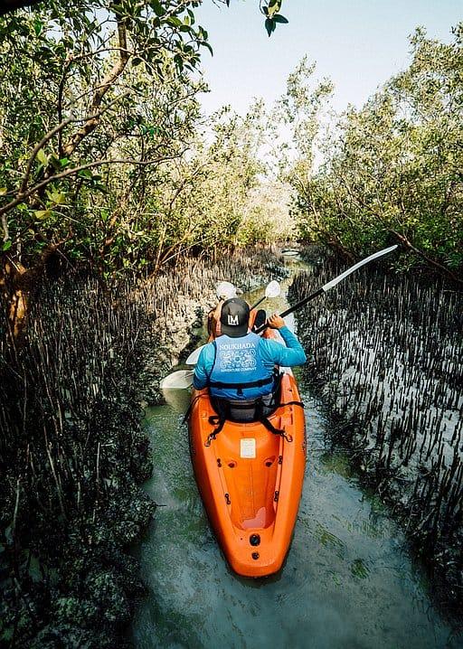 Mangroven in Abu Dhabi
