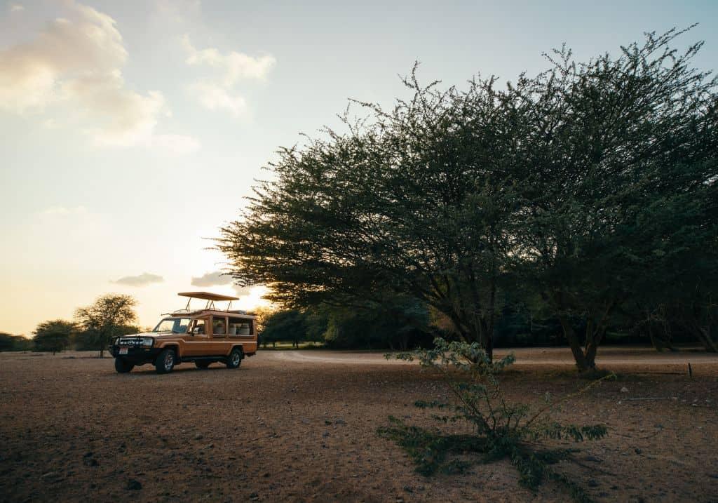 Safari auf Abu Dhabis Insel Sir Bani Yas